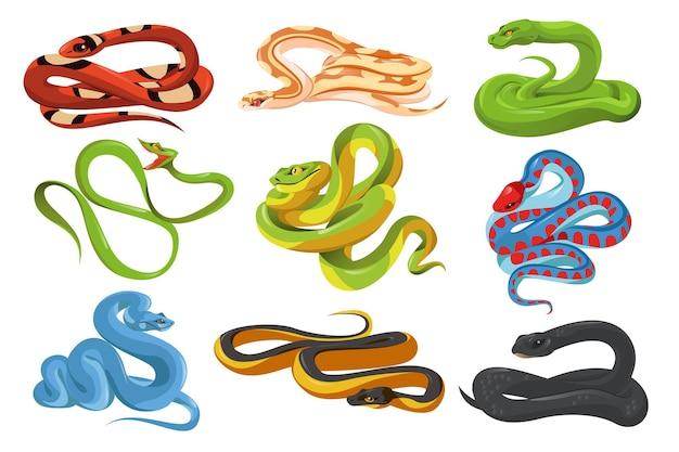 Змеи тропических змей, изолированные на белом фоне