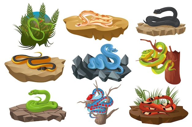 Serpenti serpenti tropicali su alberi e pietre