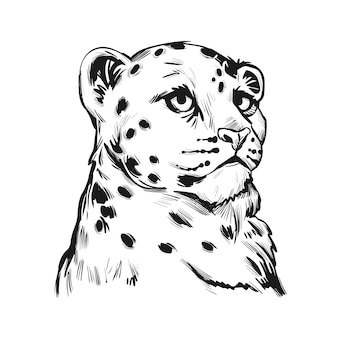 Snow leopard baby, portrait of exotic animal isolated sketch. hand drawn illustration.