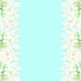 Snow white agapanthus border