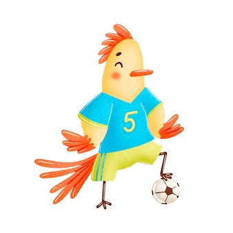 Soccer cock isolated on white  . soccer animals.