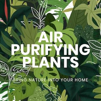 Вектор шаблона завода в социальных сетях с текстом растений, очищающих воздух