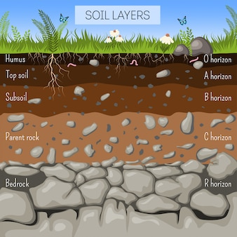 Soil layers diagram with grass, earth texture, stones, plant roots, underground species. Premium Vector