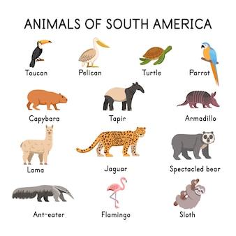 南アメリカの動物トゥーカンペリカンタートルオウムカピバラバクラマジャガーメガネグマフラミンゴナマケモノアルマジロアリクイ白い背景フラット漫画イラスト