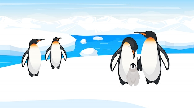 South pole wildlife   illustration. emperor penguins breed on snow hill. polar bird species colony in natural habitance. snow wilderness. iceland environment. animal cartoon characters