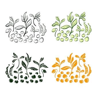 大豆植物の穀物の葉のセット手描きイラスト