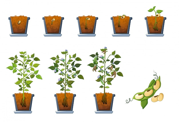 Soy beans seed sprout in pot icons set