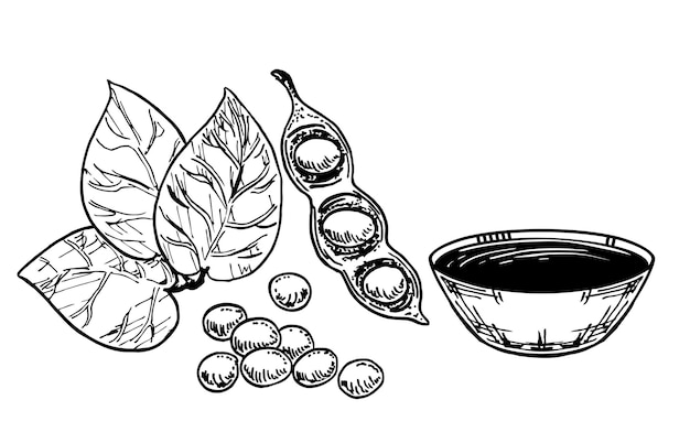 醤油、大豆、大豆。白い背景で隔離の食品図面をスケッチします。白い背景で隔離の寿司調味料。アジアのスパイス。ベクトルデザインイラスト