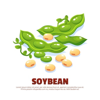 Soybean  composition for template label packing and farmer market emblem with green soy pods and ripe beans cartoon