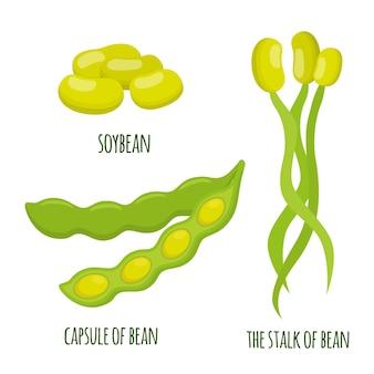 Soybean plant in flat design