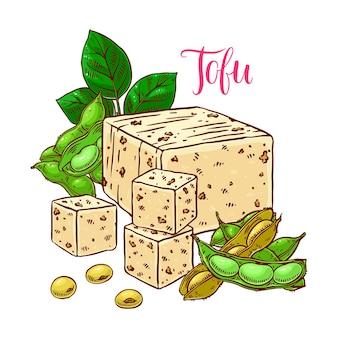 Соевые бобы и тофу. нарисованный от руки