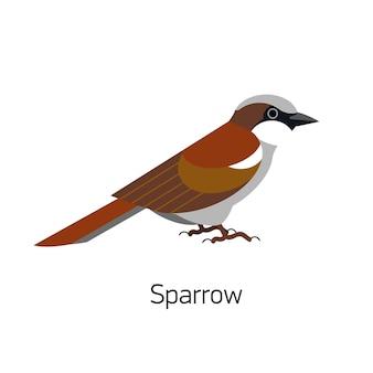 Sparrow bird isolated