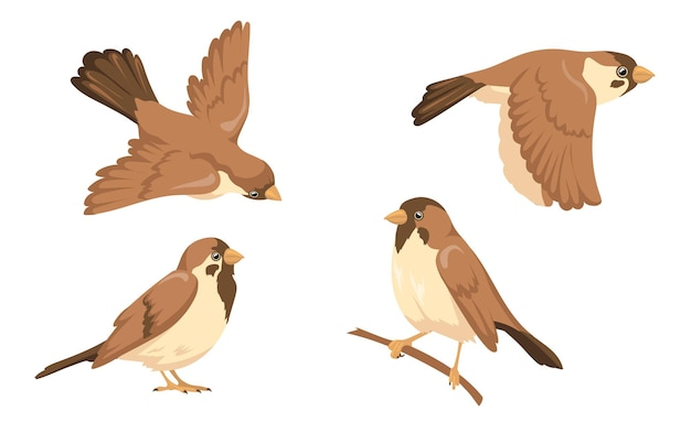 Sparrow character illustrations set