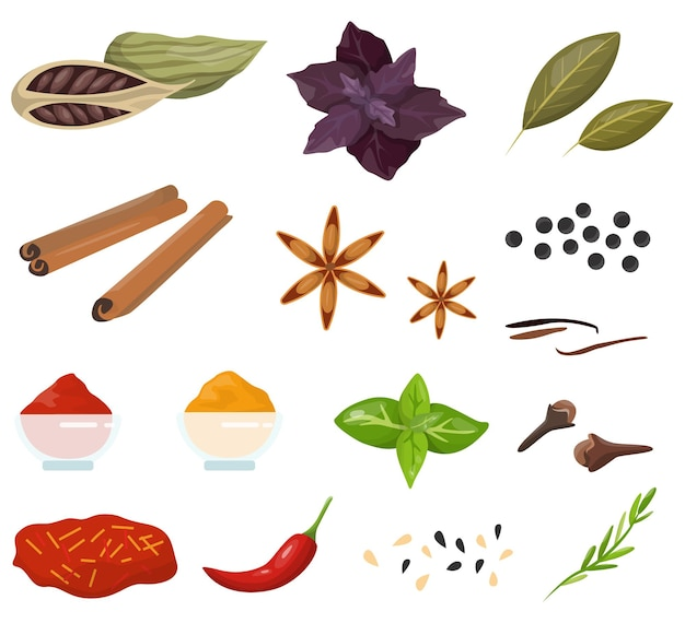 Spice for cooking delicious food collection. herbs with good smell.