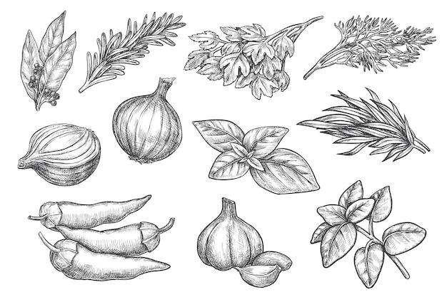 スパイスのスケッチ。ハーブとスパイスの手描きセット。シナモンとベイリーフ、コショウ、タマネギ、ニンニク、ミント、レモンバーム、ローズマリー、グリーンバジルスケッチ図。刻まれた芳香植物コレクション
