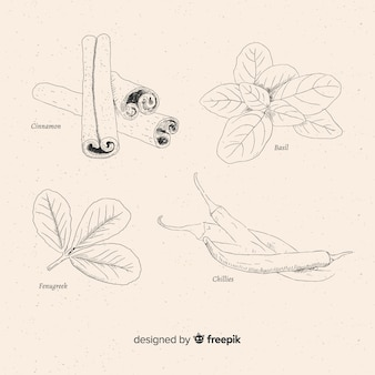 Коллекция специй и трав