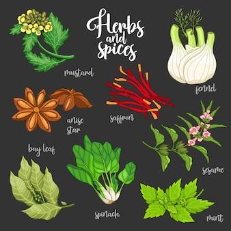 Набор специй и трав для приготовления вкусной и здоровой пищи. цветные ботанические иллюстрации на темном фоне с горчицей, лавровым листом, звездой аниса, шафраном, кунжутом, фенхелем, мятой, шпинатом.