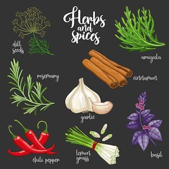 Набор специй и трав для приготовления вкусной здоровой пищи. цветные ботанические иллюстрации на темном фоне с семенами укропа, розмарином, перцем чили, рукколой, чесноком, корицей, базиликом, лемонграссом.