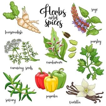 Набор специй и трав для приготовления вкусной здоровой пищи.