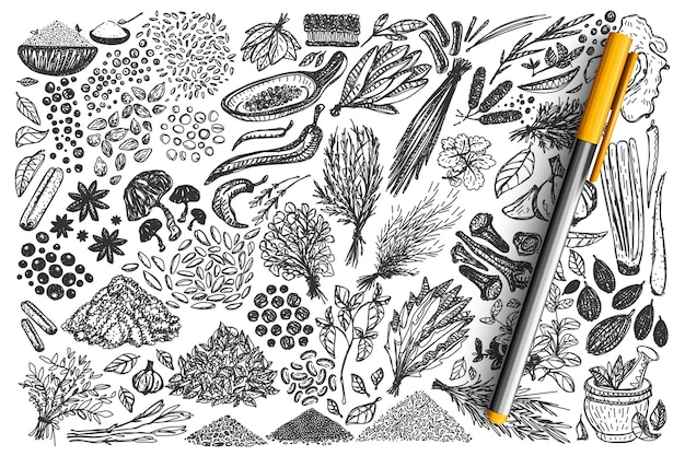 Spices doodle set. collection of hand drawn different condiments herbs coriander carnation ginger