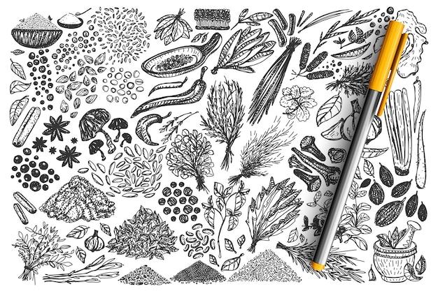 향신료 낙서 세트. 손으로 그린 다른 조미료 허브 고수 카네이션 생강의 컬렉션