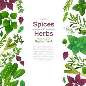 Spices and herbs background