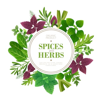 Spices and herbs frame. fresh herb cooking aromatic plants. indian food vector frame