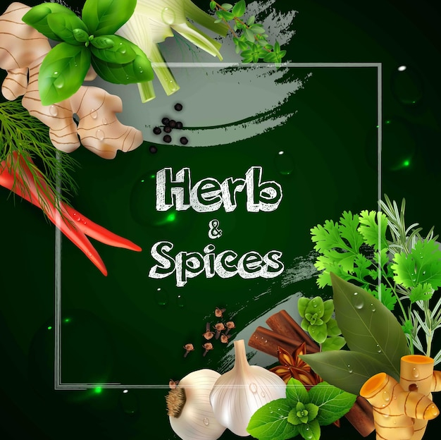 Spices and herbs on the green background