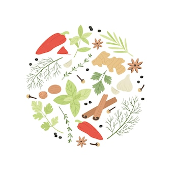 Spices and herbs illustration