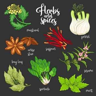 Spices and herbs  set to prepare delicious and healthy food. colored botanical illustration on dark background with mustard, bay leaf, anise star, saffron, sesame, fennel, mint, spinach.