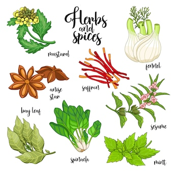 Spices and herbs set