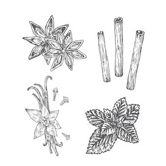 スパイスイラスト。アニス、バニラとクローブ、ミント、シナモンの抽象的なスケッチ。手描きイラスト。