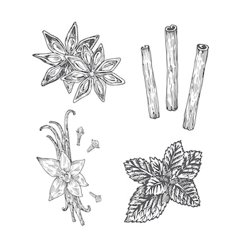 Spices illustration. anise, vanilla with clove, mint and cinnamon abstract sketch. hand drawn  illustration.