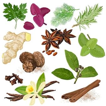 Spices. menu icon set. dill, parsley, coriander, rosemary, marjoram, basil, mint, bay leaves, vanilla, cloves, cinnamon, star anise, ginger and nutmeg hand drawn realistic symbols.