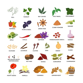 Spices set illustrations. dill and basil, nutmeg and cinnamon.