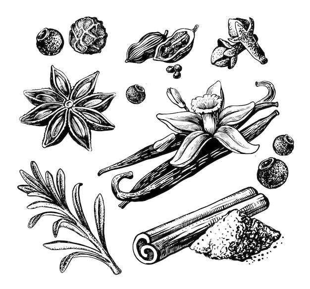 향신료 스케치. 손으로 그린 계피, 카다멈, 정향, 바닐라, 로즈마리, 후추.