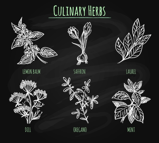 Spicy herbs on chalkboard background