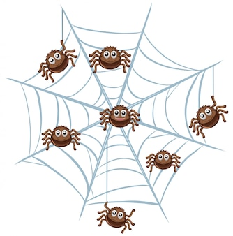 Паук в паутине на белом
