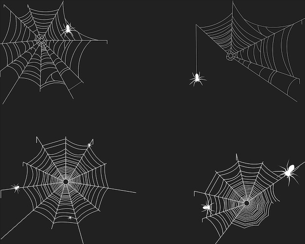 Spider's web on white