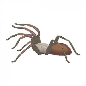 Паук тарантул на охоте Premium векторы