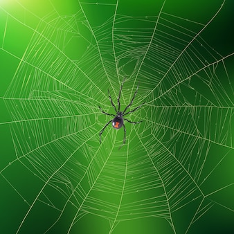 Spider weaving its web realistic illustration