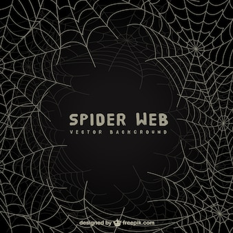 Spider web background on blackboard