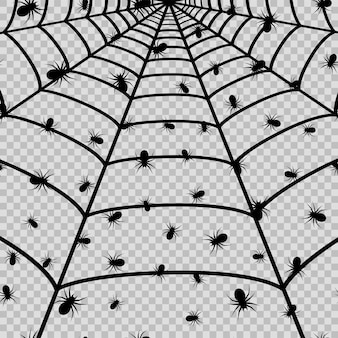 Spider web with black spider for halloween on the transaprent background. vector