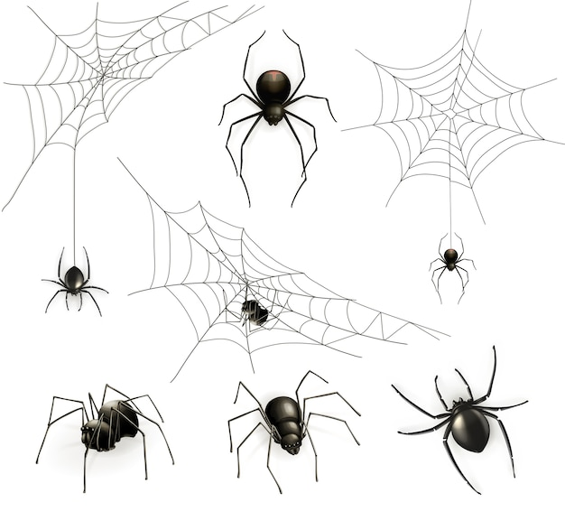 Spiders and spider web set