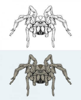 Spiders walking in hand drawing
