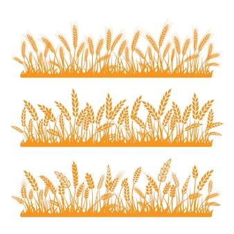 Spikelets of golden wheat set