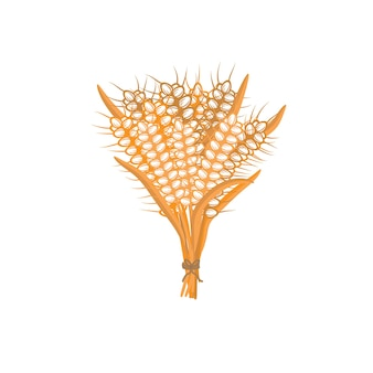 Spikelets of wheat on a white background a bunch of ears isolated vector illustration