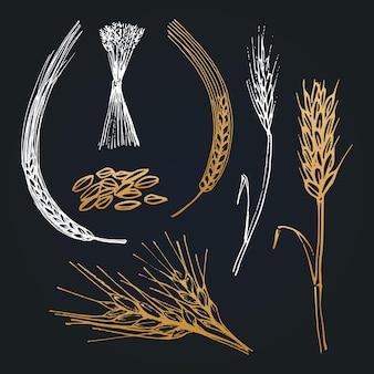 밀, 보리, 호밀, 손으로 그린 컬렉션의 스파이크와 귀. 양조장 아이콘, 농장 로고, 에코 푸드 기호, 유기농 제품 기호에 대한 벡터 시리얼 삽화.