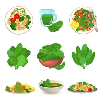 Spinach icons set. cartoon set of spinach icons