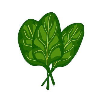 Spinach lettuce isolated on white background. kind salad in flat style. agriculture symbol for any purpose.design vector illustration.
